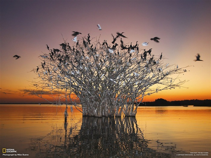 Pantanal wetlands of the birds-National Geographic-Photo of the Day Views:41799