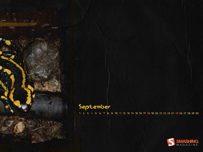 Salamander-September 2011-Calendar Desktop Wallpaper Views:3828