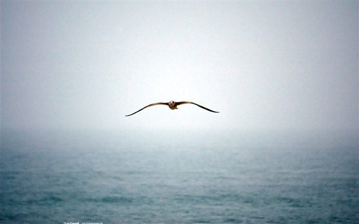 Seagull-Nature Landscape wallpaper selected Views:7029