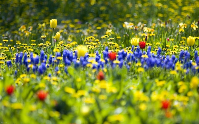 Spring wildflowers bloom-Nature Landscape wallpaper selected Views:41339