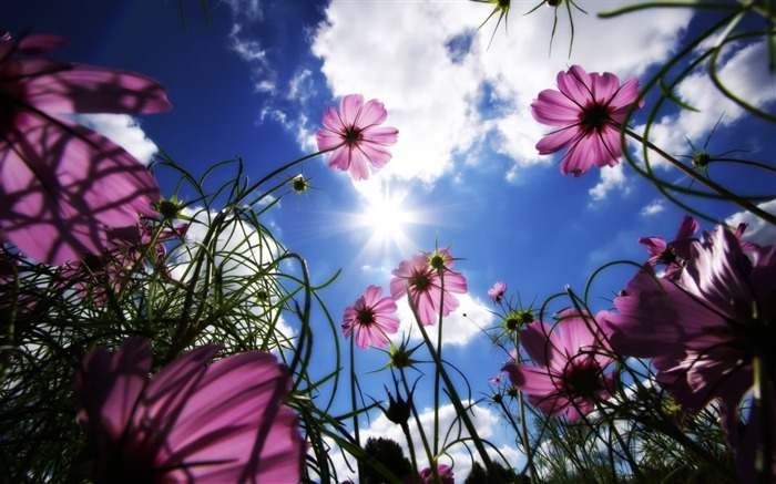 Under the sun wild flowers-Summer romance Feelings Views:9315