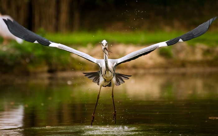 bird catching its meal-Animal World Series Wallpaper Views:4608
