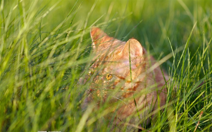 cats hiding in the bushes-Nature Landscape wallpaper selected Views:4643