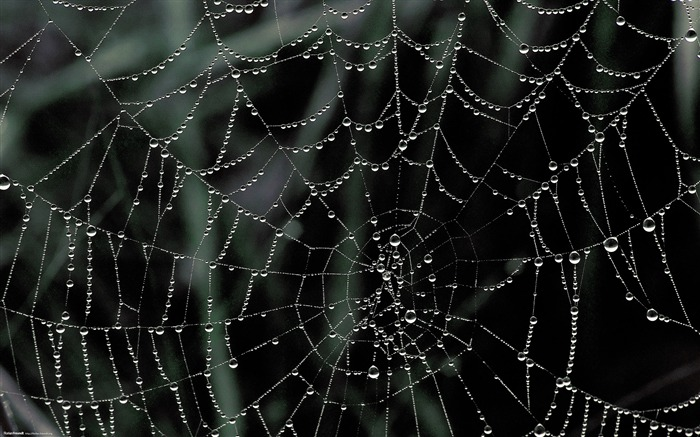 dew covered spider web-Nature Landscape wallpaper selected Views:25786