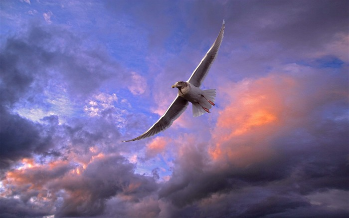 flying bird-Animal World Series Wallpaper Views:6130