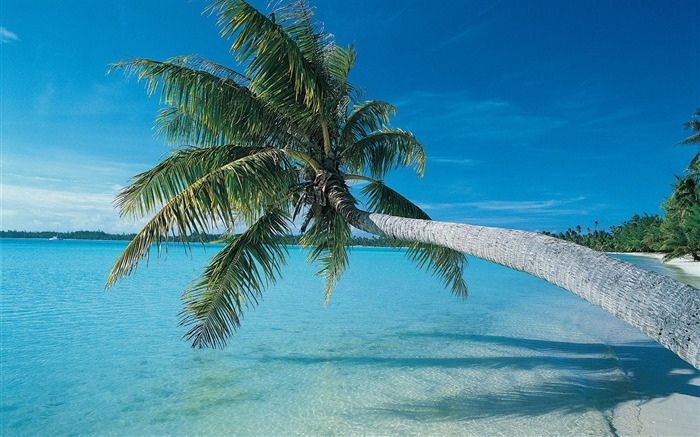 inclined to the growth of palm trees beach wallpaper Views:9512