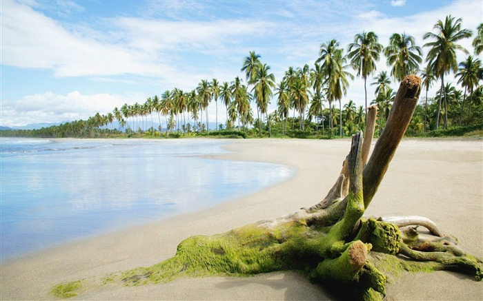 palm trees and tropical coast wallpaper Views:3024
