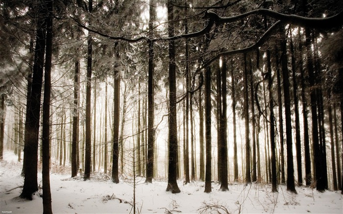 snow in the woods-Nature Landscape wallpaper selected Views:13135