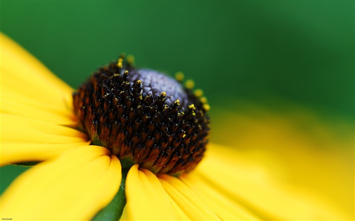 yellow daisy-Nature Landscape wallpaper selected Views:6105