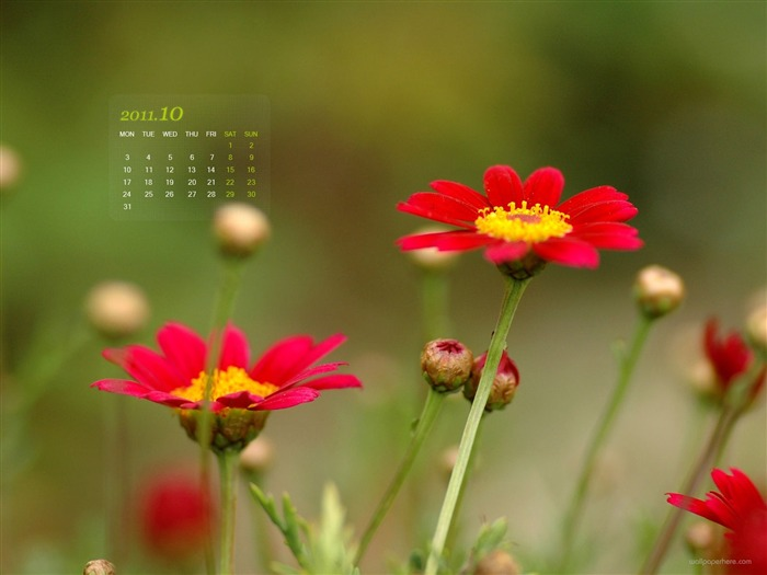 Red Flowers-October 2011 - calendar wallpaper Views:4169