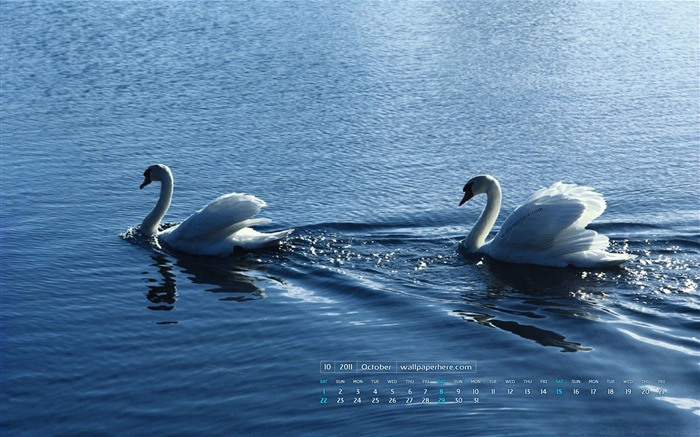 Swan Couple-October 2011 - calendar wallpaper Views:4532