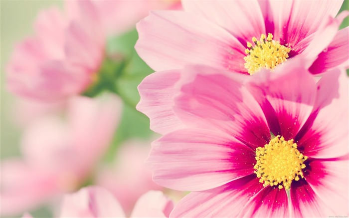 Fresh and natural flowers Desktop Wallpapers Views:20959