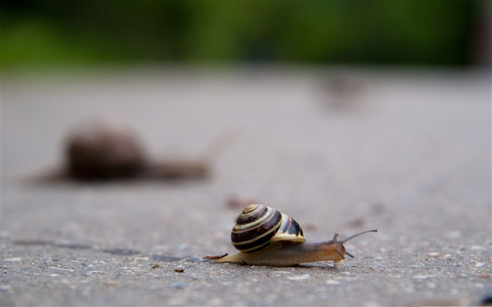 New travel-snail desktop picture album Views:5949