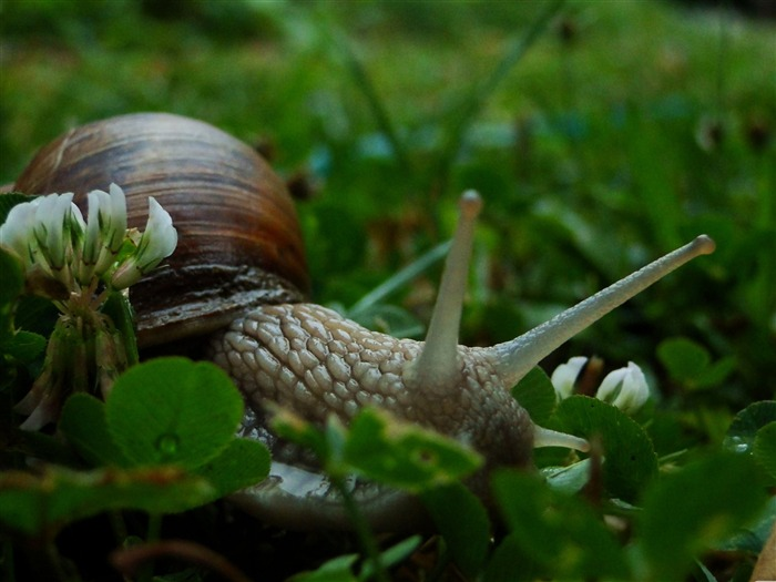 a snail in garden-snail desktop picture album Views:5739