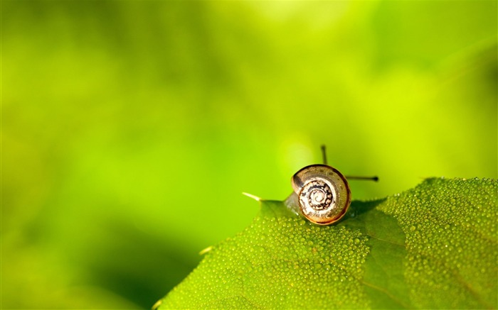 Little world-snail desktop picture album Views:5974