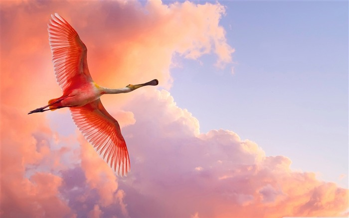 Free to fly - birds Desktop Wallpapers Views:11295