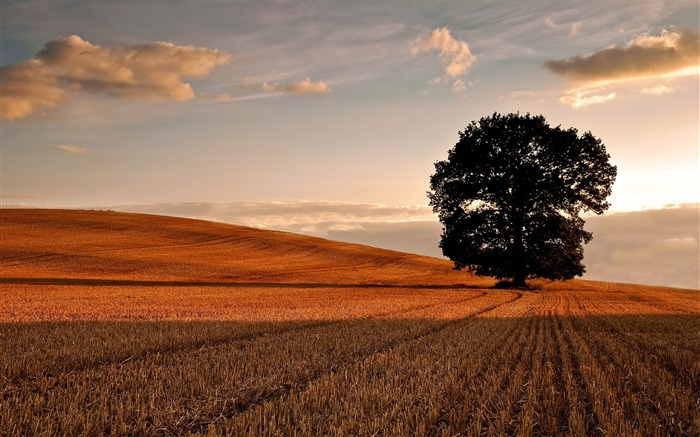 lone tree in field autumn-Beautiful natural scenery Desktop Wallpapers Views:13042