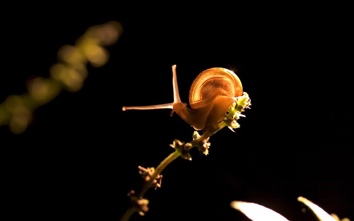 snail on branch-snail desktop picture album Views:4498