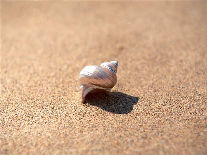snail shell-snail desktop picture album Views:5212