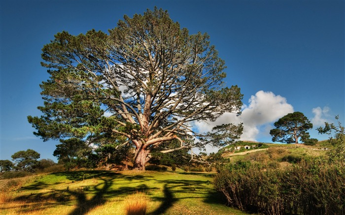 tree hdr-Beautiful natural scenery Desktop Wallpapers Views:7185
