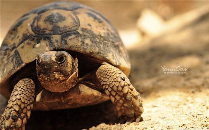 turtle close up -Animal World Series Wallpaper Views:2572