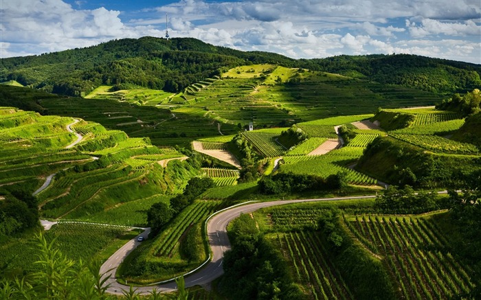 vineyards-Beautiful natural scenery Desktop Wallpapers Views:33415