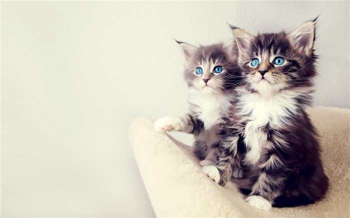 cute kittens-Cute pet cat desktop pictures wallpaper Views:41608