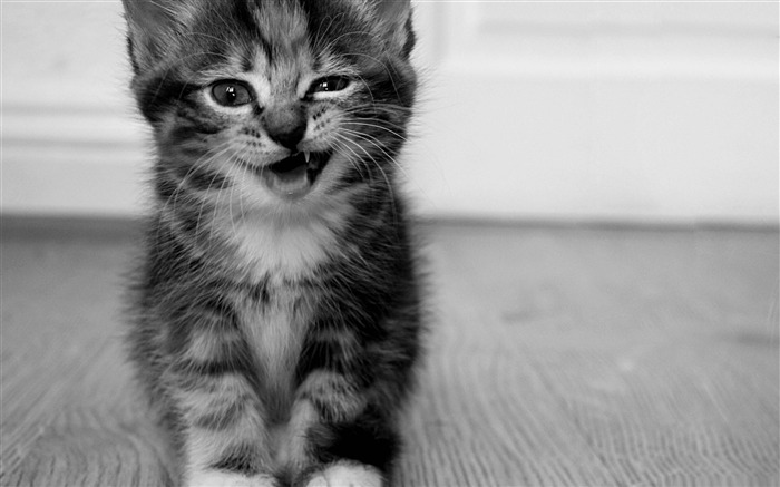 funny kitten-Cute pet cat desktop pictures wallpaper Views:7112