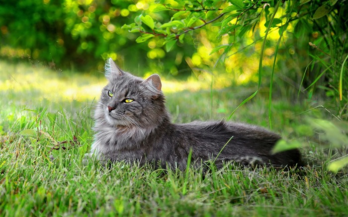 lazy cat outdoors-Cute pet cat desktop pictures wallpaper Views:5246