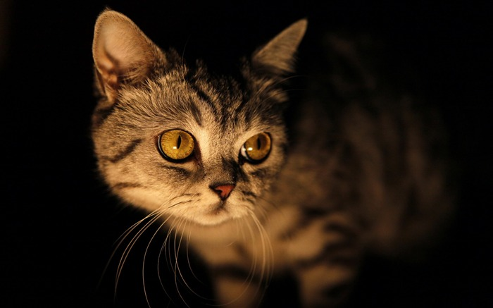 mysterious cat-Cute pet cat desktop pictures wallpaper Views:6061