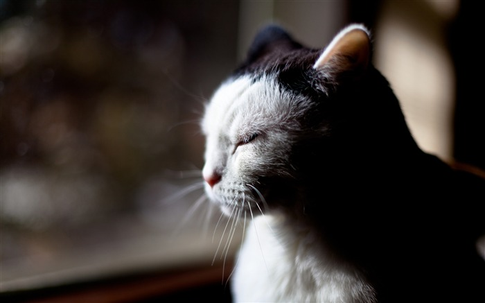 sleepy cat-Cute pet cat desktop pictures wallpaper Views:5276