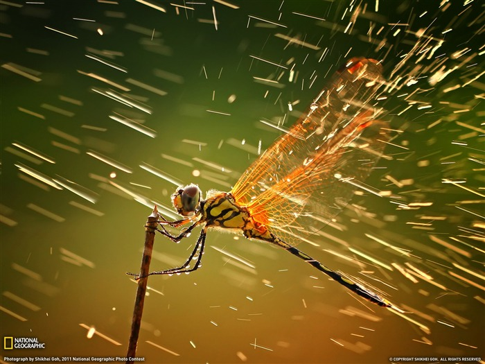Dragonfly Indonesia-Landscape photography theme wallpaper Views:16648
