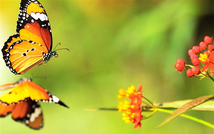 beautiful butterfly 03-the beautiful butterfly desktop wallpaper Views:6923