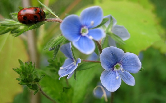 bug and blue flower-Amazing Flowers Photography Photo Wallpaper Views:5570