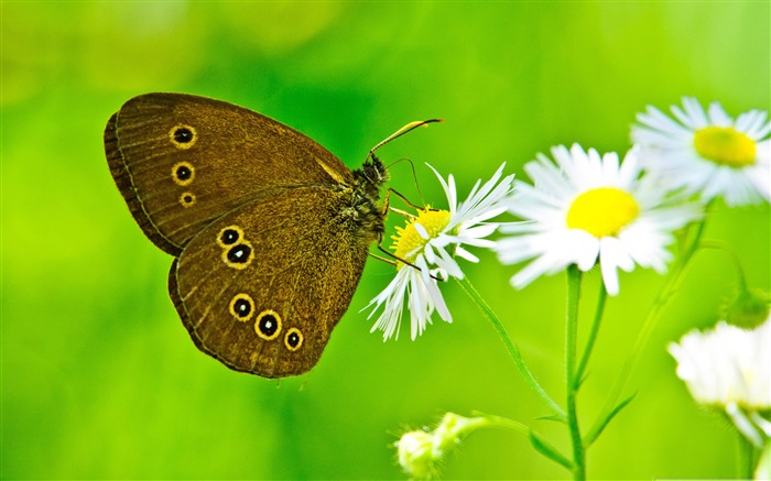 Magnificent transformation-the beautiful butterfly desktop wallpaper Views:12238