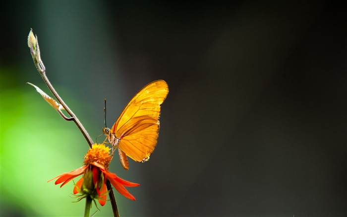 butterfly in the light-the beautiful butterfly desktop wallpaper Views:5738