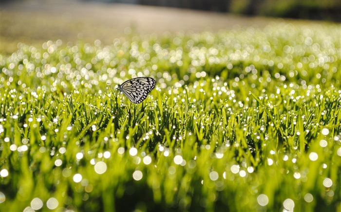 butterfly on grass-the beautiful butterfly desktop wallpaper Views:13152