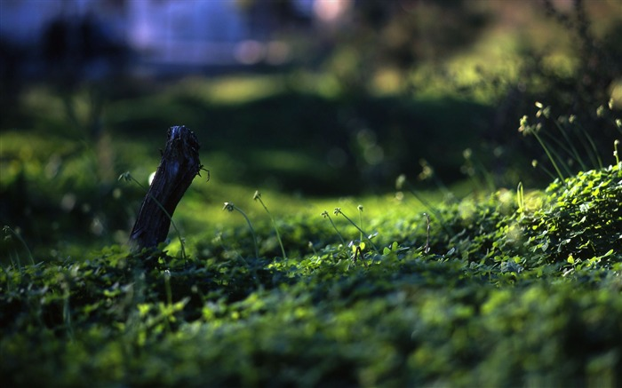 grass macro photography - photo #25