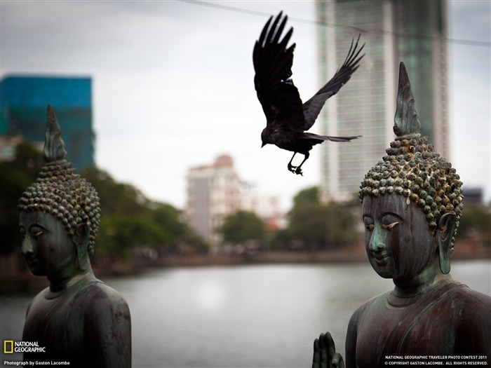 Buddhas and Bird Sri Lanka-National Geographic Travel Photos Views:4910