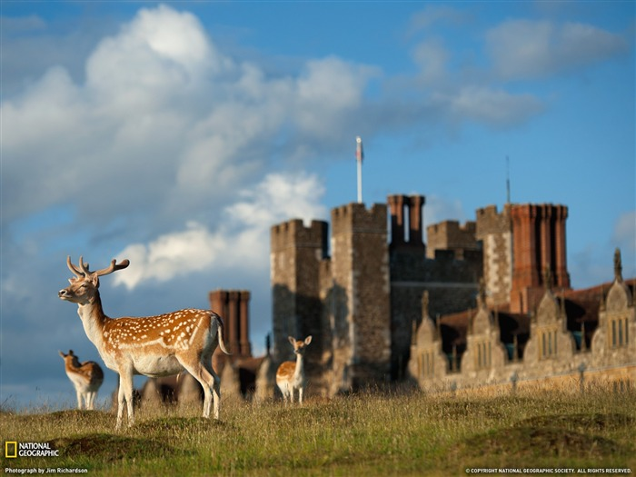 Deer England-National Geographic magazine Views:7122