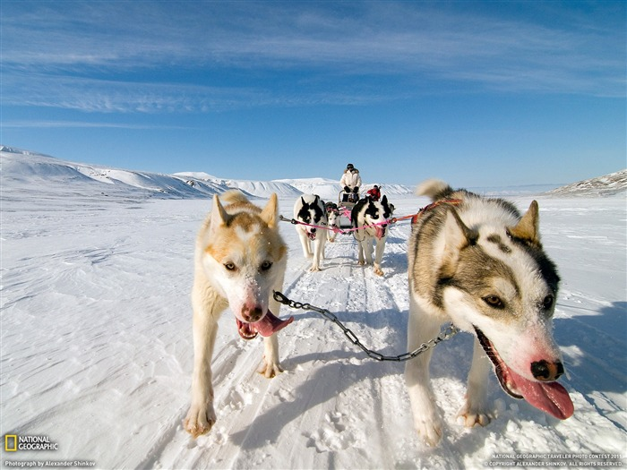 Dog Sled Norway-National Geographic Travel Photos Views:4450