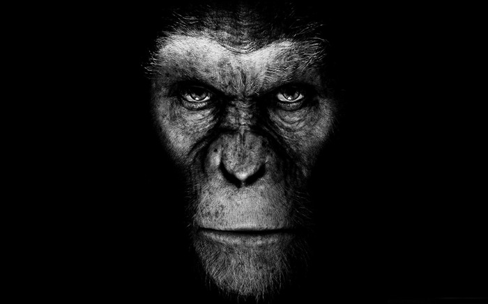 Rise of the Planet of the Apes-2011 Movie Selection Wallpaper Views:6452