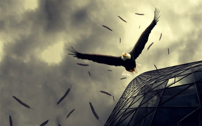 bald eagle flying-Photoshop Creative Design picture Views:7191