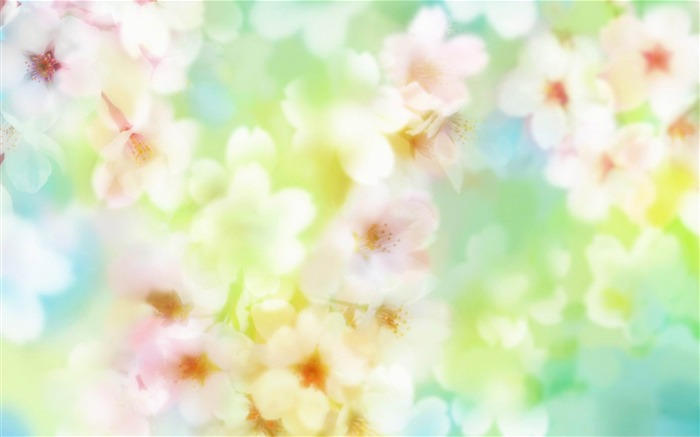 beautiful blossom flowers-spring theme Desktop wallpaper Views:8081