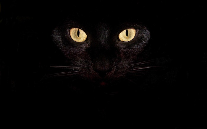 black cat eyes-Cute pet cat desktop pictures Views:43561
