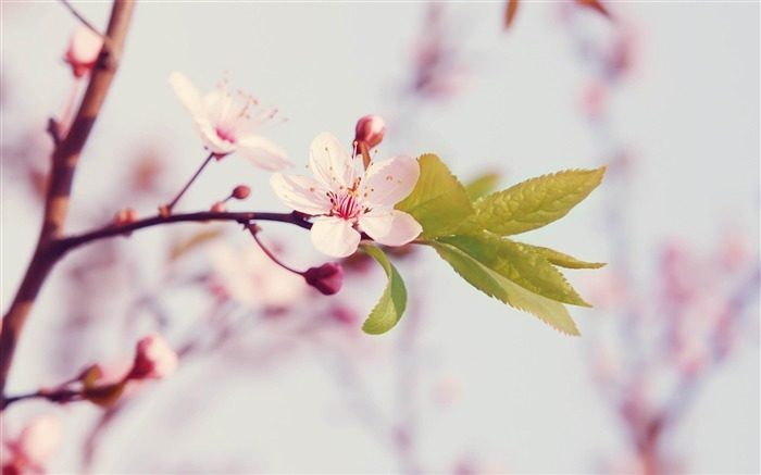 Spring arrival of when-spring theme Desktop wallpaper Views:11545