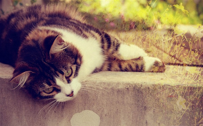 cat sleep-Cute pet cat desktop pictures Views:4400