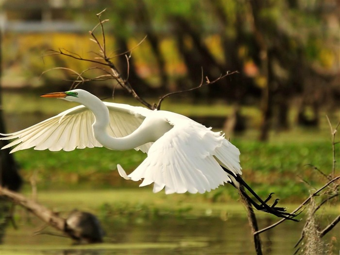Beautiful bird photography wallpaper Views:17000