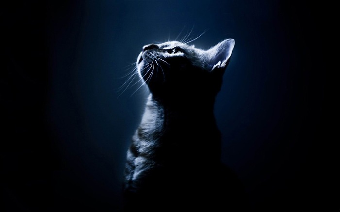 kitten in the dark-Cute pet cat desktop pictures Views:10186