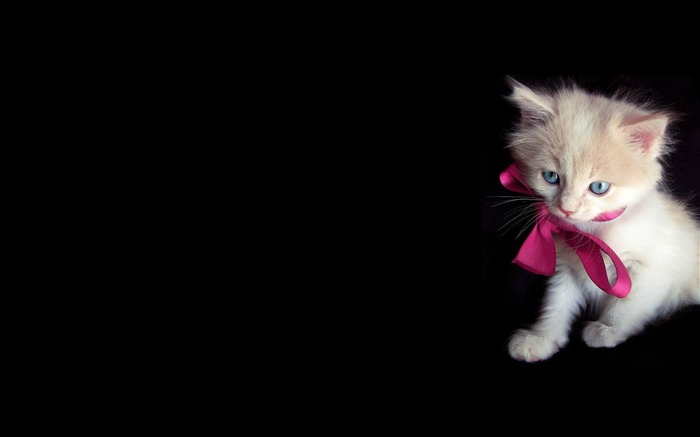 little kitty-Cute pet cat desktop pictures Views:5971